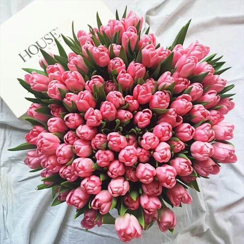 bom dia flor do dia.jpg